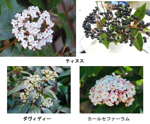 f:id:yachikusakusaki:20171209004654j:plain