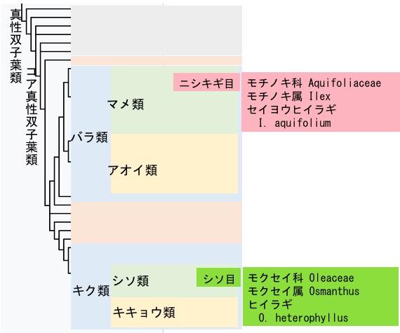 f:id:yachikusakusaki:20171212001114j:plain