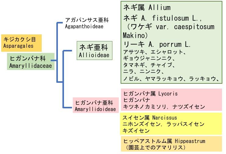 f:id:yachikusakusaki:20171214033715j:plain