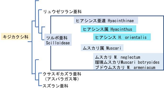 f:id:yachikusakusaki:20171216004850j:plain