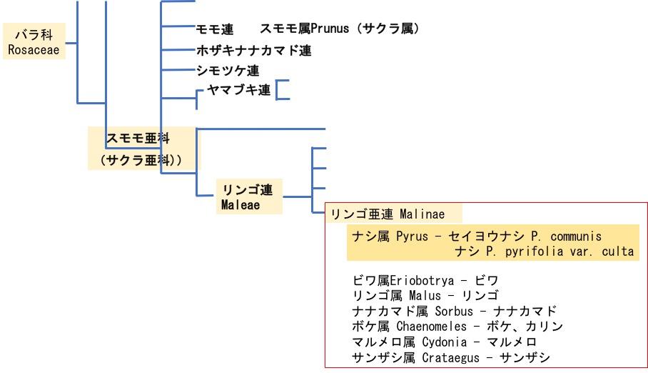 f:id:yachikusakusaki:20171222134300j:plain