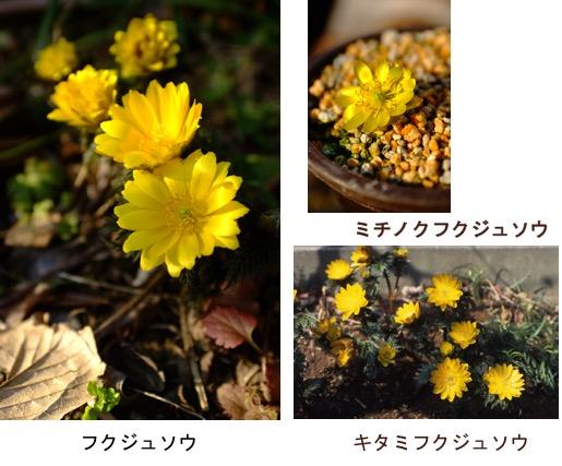 f:id:yachikusakusaki:20180103015036j:plain