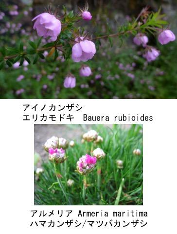 f:id:yachikusakusaki:20180115215942j:plain