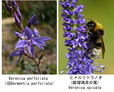 f:id:yachikusakusaki:20180121234723j:plain