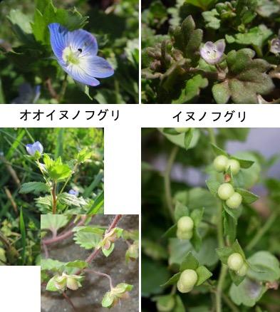 f:id:yachikusakusaki:20180122213108j:plain