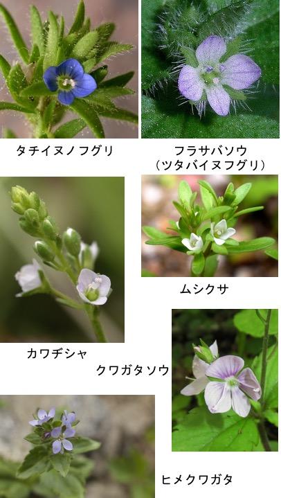 f:id:yachikusakusaki:20180123004331j:plain