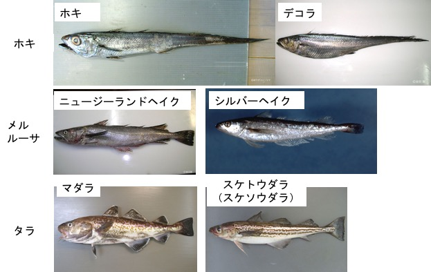 f:id:yachikusakusaki:20180129233856j:plain