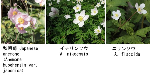 f:id:yachikusakusaki:20180131231019j:plain