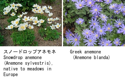 f:id:yachikusakusaki:20180131231412j:plain