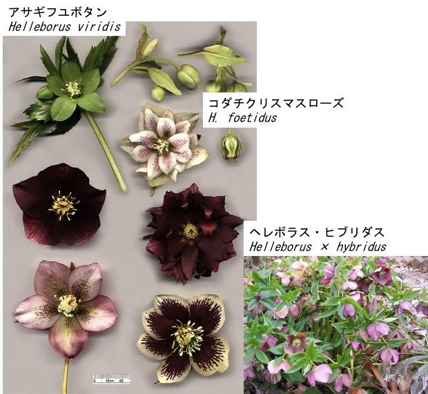f:id:yachikusakusaki:20180207000241j:plain