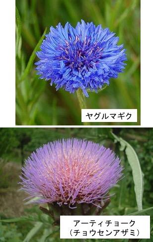 f:id:yachikusakusaki:20180210013007j:plain