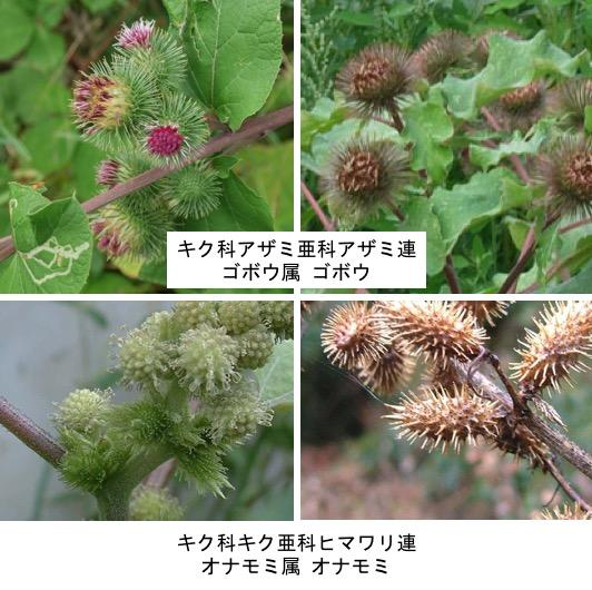 f:id:yachikusakusaki:20180210014059j:plain