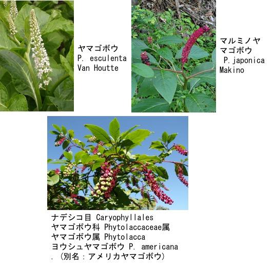 f:id:yachikusakusaki:20180210021137j:plain