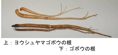 f:id:yachikusakusaki:20180210022715j:plain