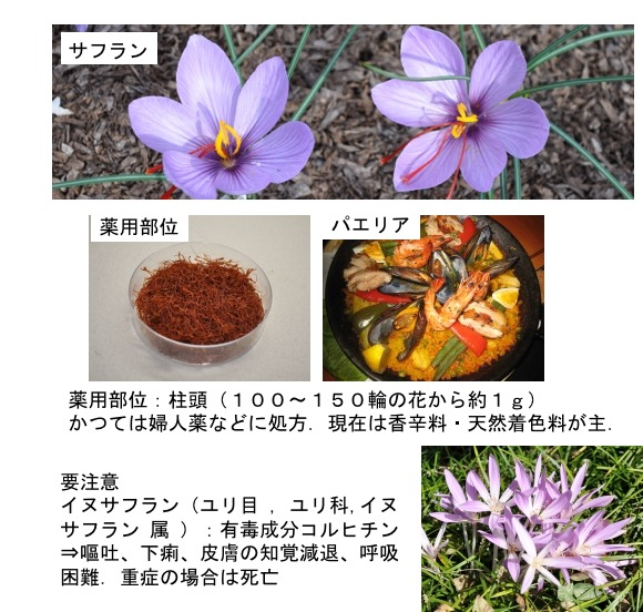 f:id:yachikusakusaki:20180211014254j:plain