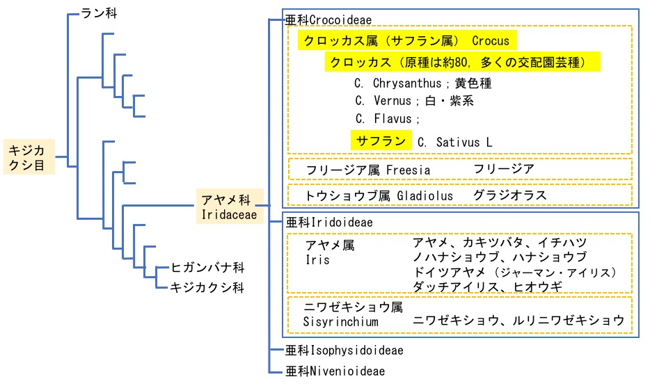 f:id:yachikusakusaki:20180211020926j:plain