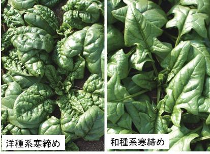 f:id:yachikusakusaki:20180211233922j:plain