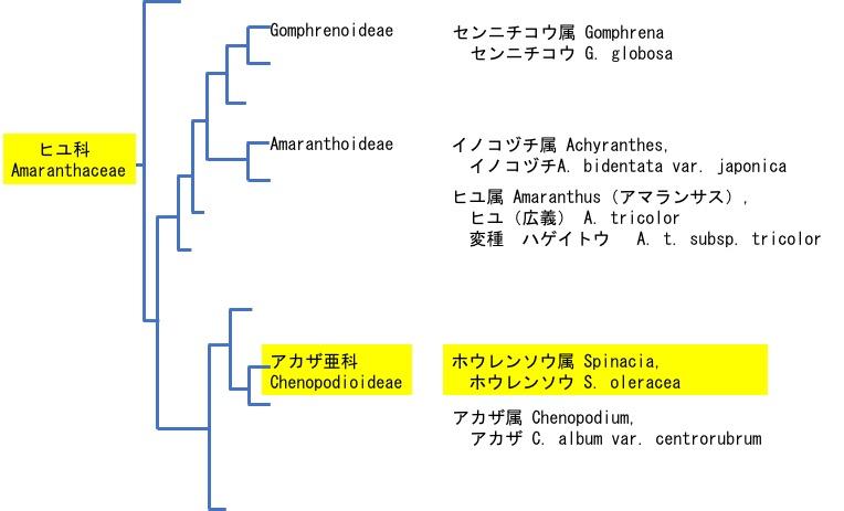 f:id:yachikusakusaki:20180212001620j:plain