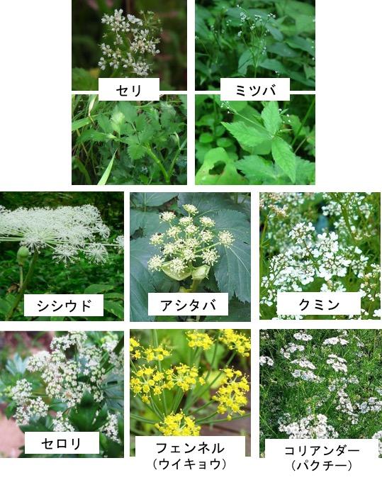 f:id:yachikusakusaki:20180216014133j:plain
