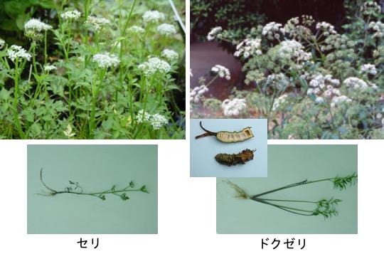f:id:yachikusakusaki:20180216014723j:plain