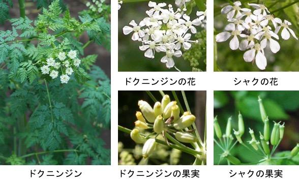 f:id:yachikusakusaki:20180216014956j:plain