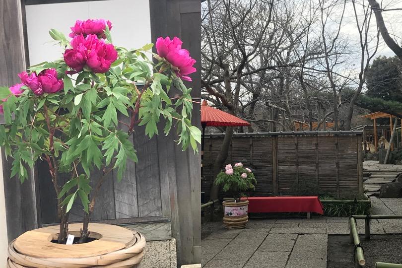 f:id:yachikusakusaki:20180216211420j:plain