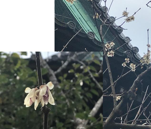 f:id:yachikusakusaki:20180216214250j:plain