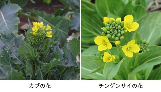 f:id:yachikusakusaki:20180220005358j:plain