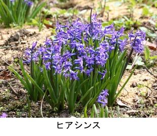 f:id:yachikusakusaki:20180303020248j:plain