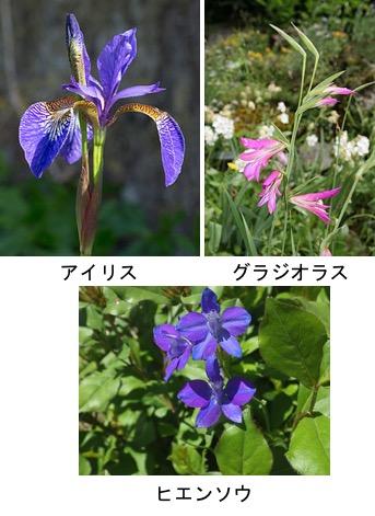 f:id:yachikusakusaki:20180303020311j:plain