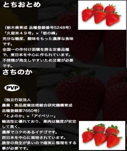 f:id:yachikusakusaki:20180310232757j:plain