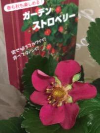 f:id:yachikusakusaki:20180313000720j:plain