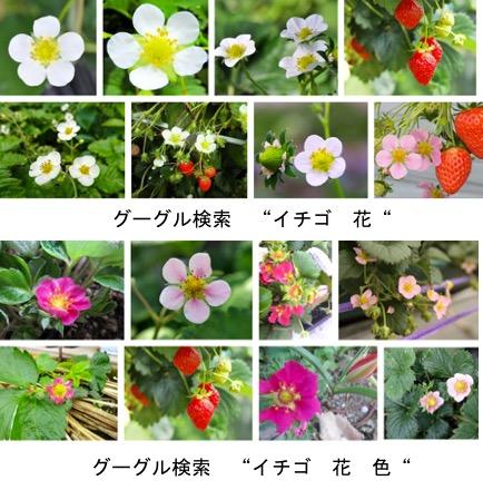f:id:yachikusakusaki:20180313001217j:plain