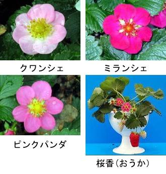 f:id:yachikusakusaki:20180313001436j:plain
