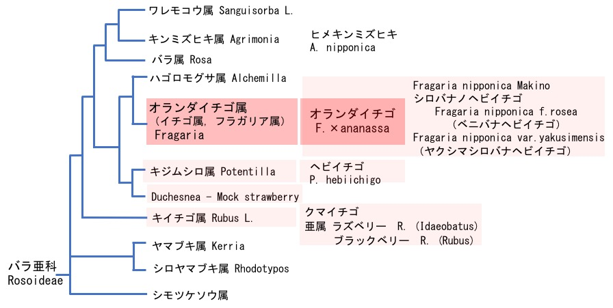 f:id:yachikusakusaki:20180313004035j:plain