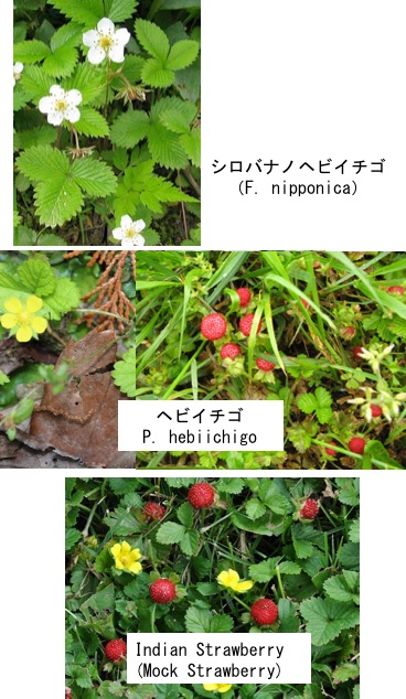 f:id:yachikusakusaki:20180313004815j:plain