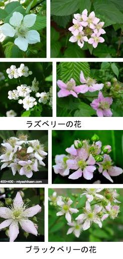 f:id:yachikusakusaki:20180313005401j:plain