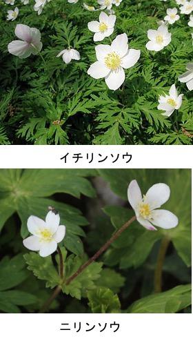 f:id:yachikusakusaki:20180313234917j:plain