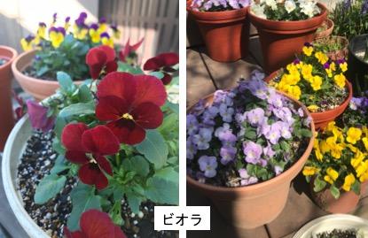 f:id:yachikusakusaki:20180314005252j:plain
