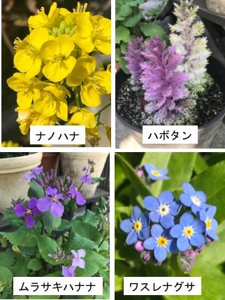 f:id:yachikusakusaki:20180314005316j:plain