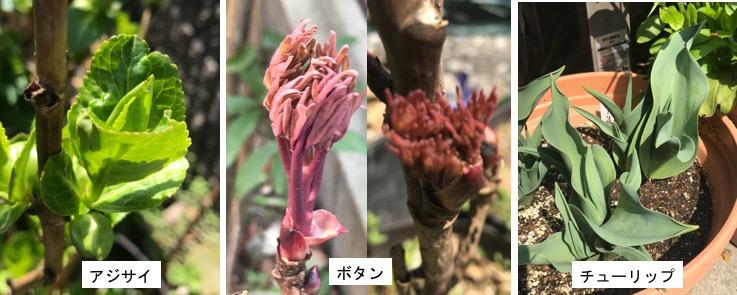 f:id:yachikusakusaki:20180314005400j:plain