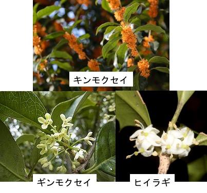 f:id:yachikusakusaki:20180315231823j:plain