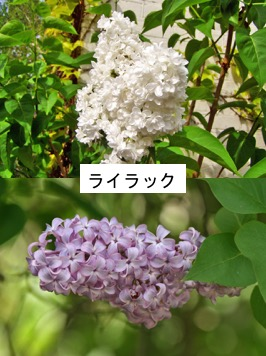 f:id:yachikusakusaki:20180315231858j:plain