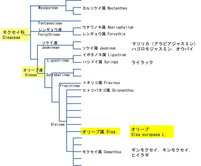 f:id:yachikusakusaki:20180315234412j:plain