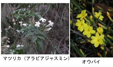 f:id:yachikusakusaki:20180315235019j:plain