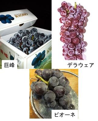 f:id:yachikusakusaki:20180325172917j:plain