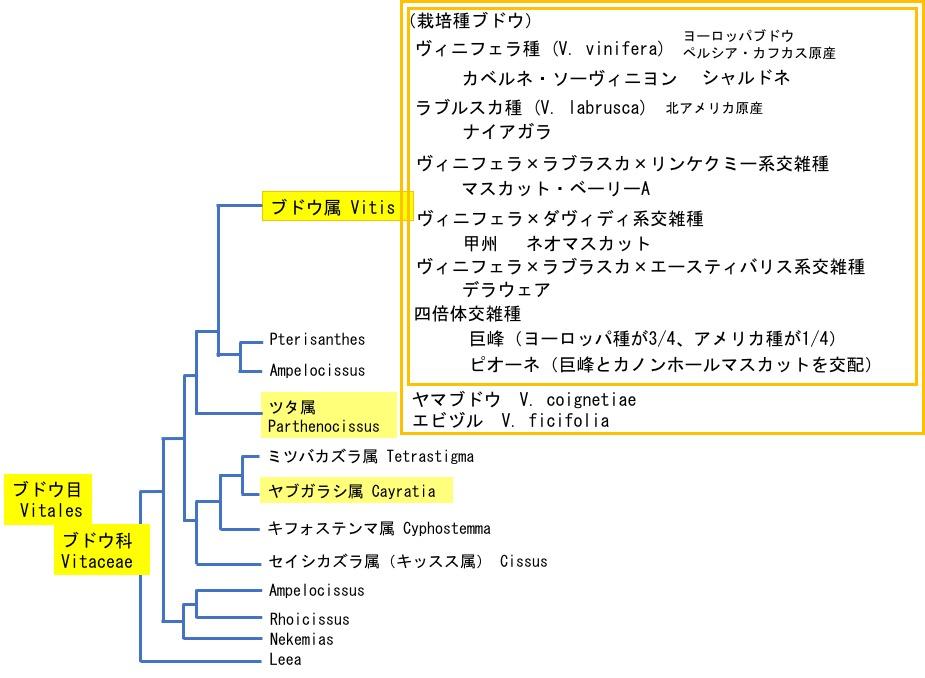 f:id:yachikusakusaki:20180325234808j:plain