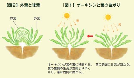 f:id:yachikusakusaki:20180404014439j:plain