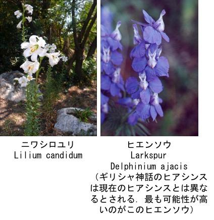 f:id:yachikusakusaki:20180408001613j:plain