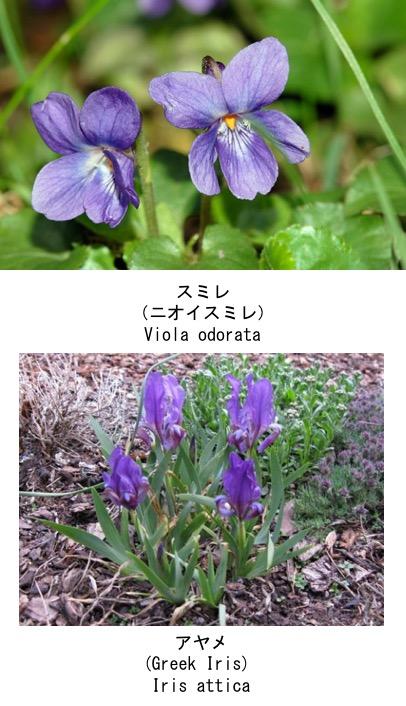 f:id:yachikusakusaki:20180408005255j:plain